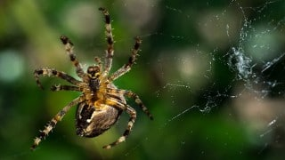 Spider weaving its web, a time lapse