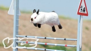 Bunny Jumping Competition