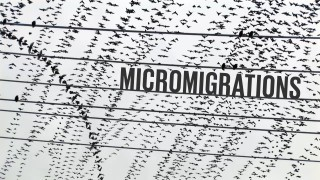 Micromigrations: visualizing the flight paths of starlings