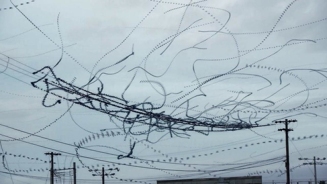 Data in data out: the flight paths of starlings