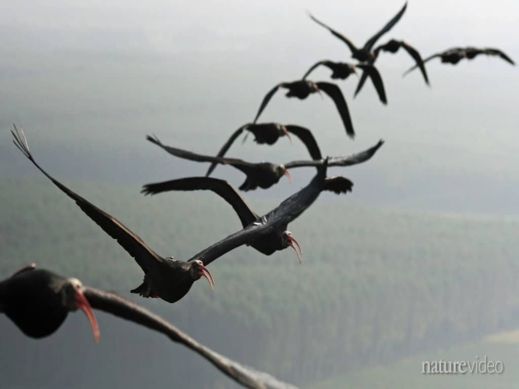 The physics of why birds fly in V-formation – Come fly ...   1024 x 768 jpeg 25kB