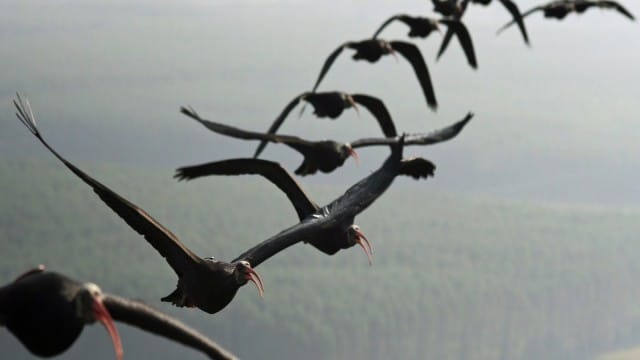 Come fly with me: the physics of why birds fly in V-formation