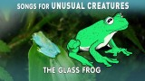 Glass Frog – Songs for Unusual Creatures