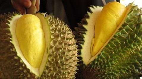 Durian, the world's smelliest fruit