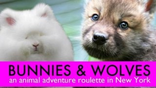 Bunnies and Wolves: An animal adventure in New York