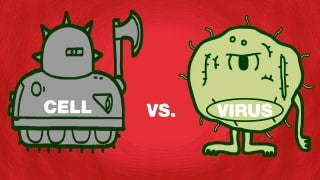 Cell vs. virus: A battle for health