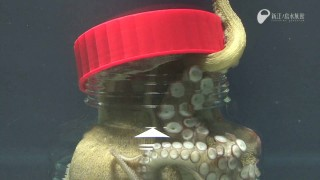 Enoshima Aquarium: An octopus unscrews a jar from the inside