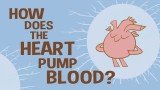 TED Ed: How does the heart pump blood?