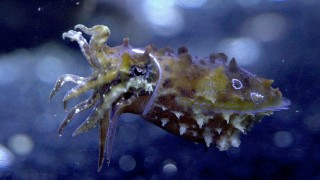 Science Friday: Caring for Cuttlefish