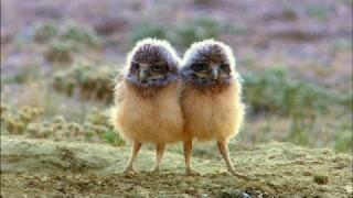The Burrowing Owl's Cozy Underground Home