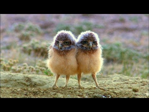 The Burrowing Owl's Cozy Underground Home