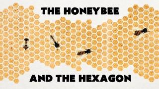 Why do honeybees love hexagons?