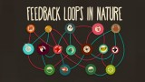 Feedback loops: How nature gets its rhythms