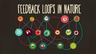 Feedback loops – How nature gets its rhythms