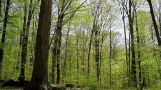 A Forest Year: A time lapse of the seasons