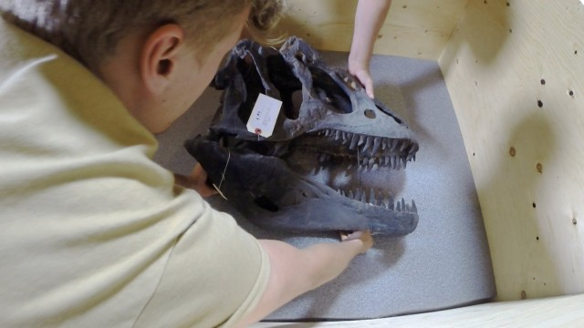 How Do You Dismantle a Dino? (Very Carefully)