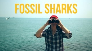 The Brain Scoop: Fossil Sharks