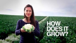 Cauliflower: How Does it Grow?