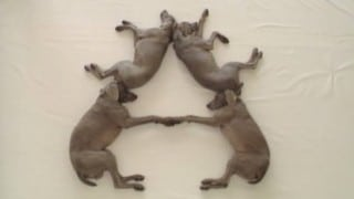 William Wegman's ABC