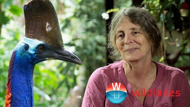 Breakfast with a Cassowary