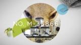 AMNH: Shelf Life – 33 Million Things