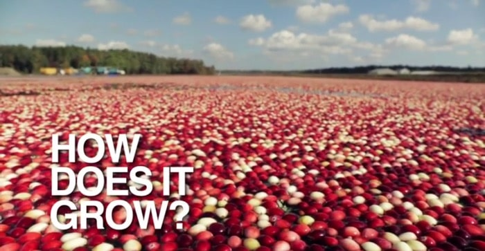 Cranberries How Does It Grow
