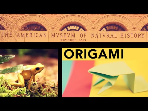 Amnh Origami Fold A Jumping Frog In 13 Easy Steps The Kid Should