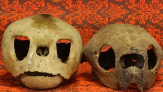 AMNH: Shelf Life – Turtles and Taxonomy