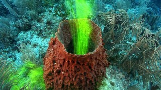 Ocean sponges have incredible filtering power