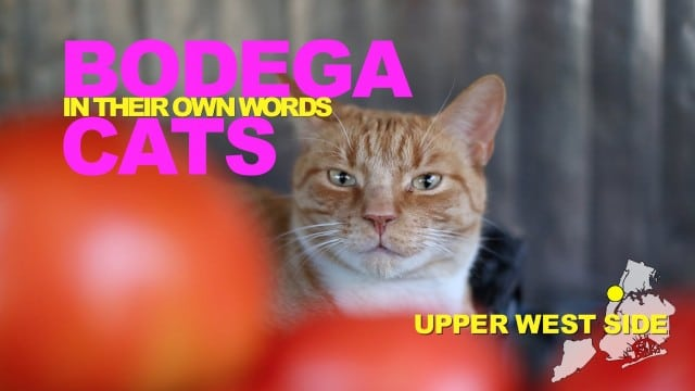 WNYC: Bodega Cats In Their Own Words