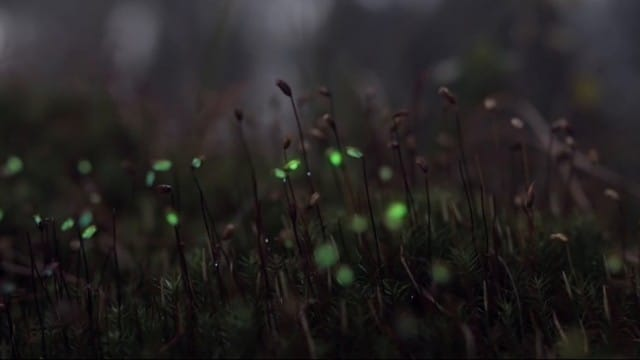 Bioluminescent forest: Nature reimagined with projection mapping
