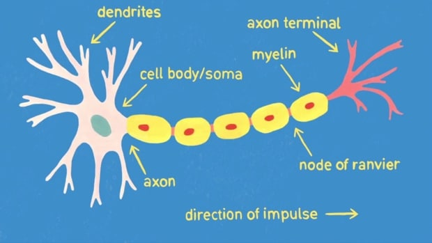 harvard-MOOC-neuroscience-animation-01