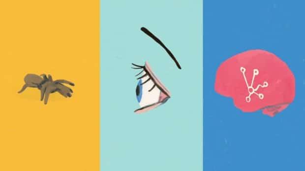 harvard-MOOC-neuroscience-animation-02