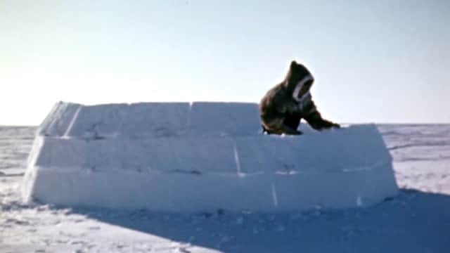 National Film Board of Canada: How to Build an Igloo (1949)