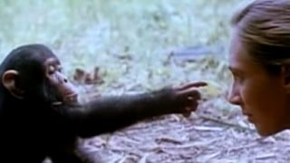 The Story of Jane Goodall and Her Chimps (2010)