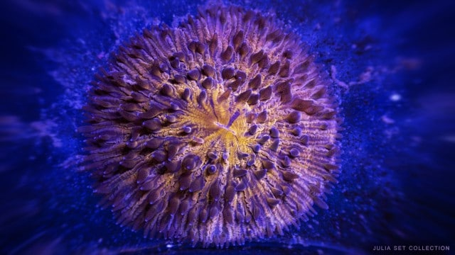 …meanwhile…: Marine life in high magnification time lapse