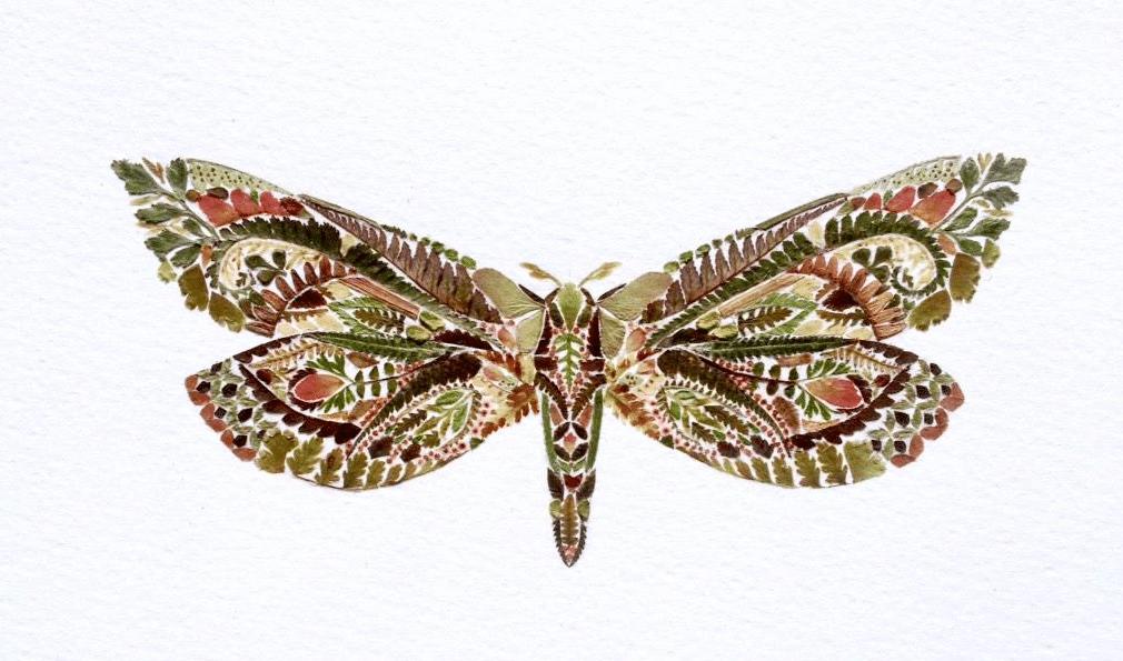 Fern-Illus-HelenAhpornsiri-moth