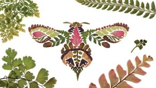 Helen Ahpornsiri's intricate pressed fern illustrations