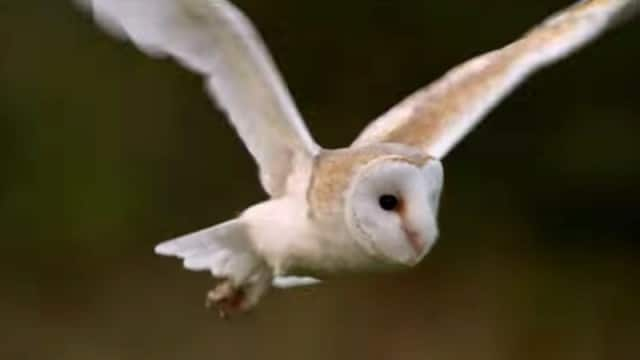 The silent flight superpower of a stealthy predator: The Owl