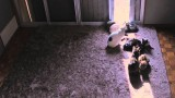 """Sunflower Cat Window"" – Eight cats in a time lapse sunbeam"