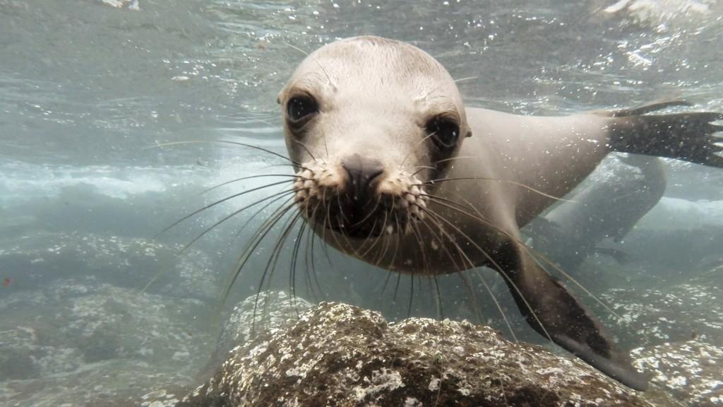Dog Sea Lion Video