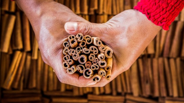 Cinnamon: Harvesting Cassia in the Jungles of Sumatra