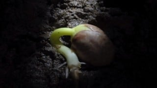 Seed germination to growth time lapses by Neil Bromhall