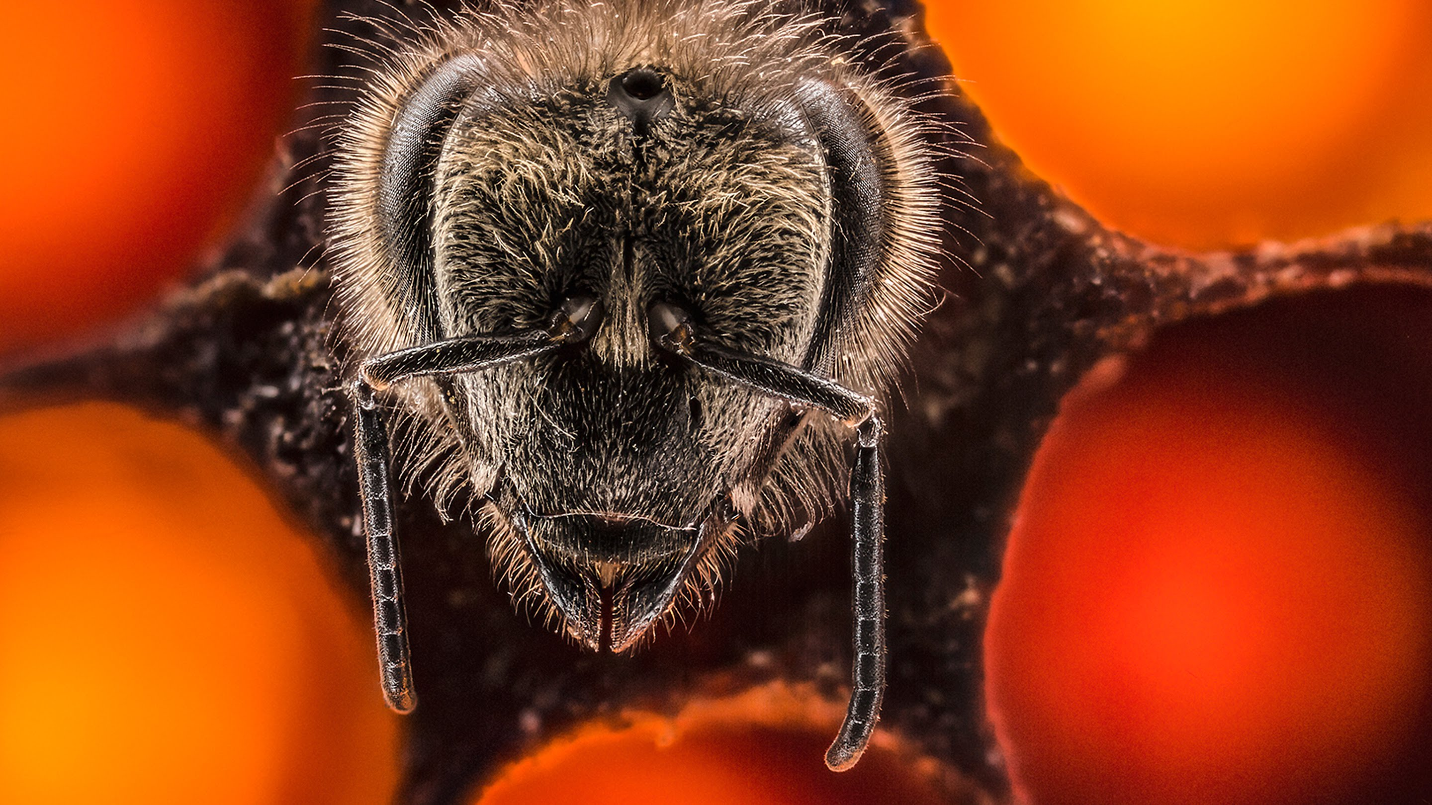 The first 21 days of a bee's life, a time lapse in 64 seconds | The Kid  Should See This