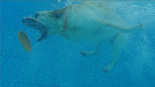 Underwater Dogs in Slow Motion – Earth Unplugged