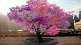 The tree that grows 40 different kinds of fruit