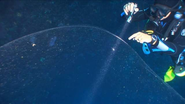 Divers may have discovered the largest squid egg mass ever seen