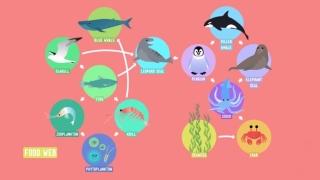 Home Sweet Habitat & Food Webs –Crash Course Kids
