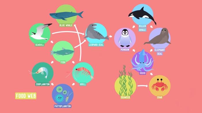 Home Sweet Habitat & Food Webs – Crash Course Kids | The ...