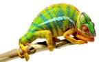 Chameleons are Amazing – National Geographic